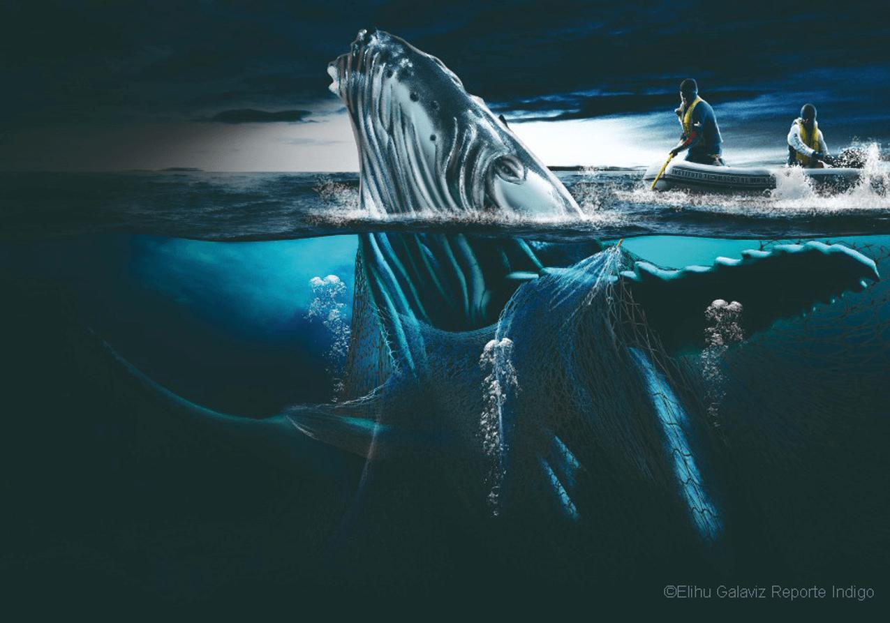 whale-art